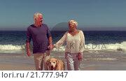 Купить «Happy old couple with dog smiling», видеоролик № 21777947, снято 5 июня 2020 г. (c) Wavebreak Media / Фотобанк Лори