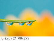 Купить «Flower refraction in dew drops on a blade of grass», фото № 21786275, снято 18 ноября 2018 г. (c) PantherMedia / Фотобанк Лори