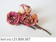Сухой букет из роз. Стоковое фото, фотограф Дмитрий Пронченко / Фотобанк Лори