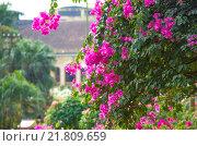 Куст тропические цветы. Стоковое фото, фотограф Наталья Богуцкая / Фотобанк Лори
