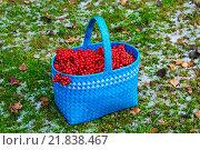 Купить «Спелая калина в плетенной корзине», фото № 21838467, снято 4 ноября 2014 г. (c) Зобков Георгий / Фотобанк Лори
