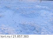 Снежный покров лесного болота зимним утром в свете восходящего солнца. Стоковое фото, фотограф Сергей Кудрявцев / Фотобанк Лори