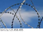 Купить «Колючая проволока», фото № 21858495, снято 21 января 2014 г. (c) Сергей Трофименко / Фотобанк Лори