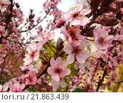 Цветущее дерево. Стоковое фото, фотограф Женя Ивина / Фотобанк Лори