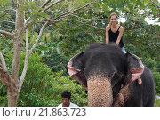Купить «Женщина катается на слоне», фото № 21863723, снято 14 декабря 2018 г. (c) Некрасов Андрей / Фотобанк Лори