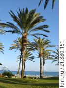 Купить «nature blue sky holiday vacation», фото № 21880151, снято 21 марта 2019 г. (c) PantherMedia / Фотобанк Лори