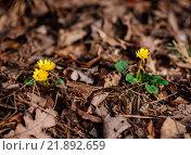 Первые цветы. Стоковое фото, фотограф Елена Ганненко / Фотобанк Лори