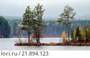 Сосны на острове посередине озера. Стоковое фото, фотограф Виктор Воинков / Фотобанк Лори
