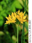 Желтый цветок. Стоковое фото, фотограф Надежда Шапкина / Фотобанк Лори