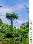 Купить «Пальма», эксклюзивное фото № 21921367, снято 26 октября 2015 г. (c) Хайрятдинов Ринат / Фотобанк Лори