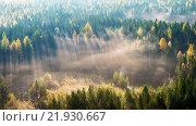 Утро в хвойных лесах Северного Урала. Стоковое фото, фотограф Виктор Воинков / Фотобанк Лори