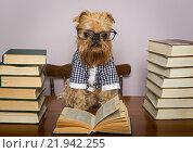 Купить «Собака сидит за столом в очках со стопками книг», фото № 21942255, снято 20 июня 2015 г. (c) Okssi / Фотобанк Лори