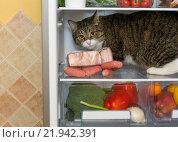 Кот залез в холодильник. Стоковое фото, фотограф Okssi / Фотобанк Лори
