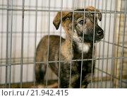 Грустный щенок в клетке. Стоковое фото, фотограф Okssi / Фотобанк Лори