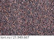 Купить «Black Rice Background», фото № 21949667, снято 23 июля 2019 г. (c) PantherMedia / Фотобанк Лори