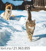 Кот и собака. Стоковое фото, фотограф Александр Пуненко / Фотобанк Лори