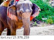 Купить «Слон», эксклюзивное фото № 21976259, снято 26 октября 2015 г. (c) Хайрятдинов Ринат / Фотобанк Лори