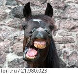 Купить «Лошадь зевает», фото № 21980023, снято 20 августа 2010 г. (c) Абрамова Ксения / Фотобанк Лори