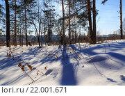 Солнечный день в зимнем лесу. Стоковое фото, фотограф Тимофеев Владимир / Фотобанк Лори