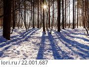 Солнце светит через деревья в зимнем лесу. Стоковое фото, фотограф Тимофеев Владимир / Фотобанк Лори
