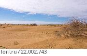 Купить «Засохший куст в пустыне», видеоролик № 22002743, снято 26 апреля 2015 г. (c) Анатолий Типляшин / Фотобанк Лори