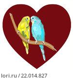 Пара влюбленных волнистых попугайчиков на фоне сердца. Стоковая иллюстрация, иллюстратор Евгения Миллер / Фотобанк Лори