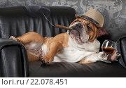 Купить «Собачья жизнь. Английский Бульдог отдыхает в черном кожаном кресле с сигарой и бокалом коньяка», фото № 22078451, снято 14 февраля 2016 г. (c) Алексей Кузнецов / Фотобанк Лори