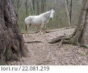 Купить «Белая лошадь в лесу», фото № 22081219, снято 3 марта 2016 г. (c) DiS / Фотобанк Лори