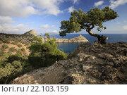 Купить «Живописная сосна у обрыва, с видом на море. Крым», фото № 22103159, снято 18 октября 2015 г. (c) Яна Королёва / Фотобанк Лори