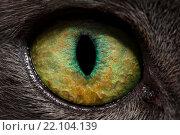 Купить «Кошачий глаз крупно», фото № 22104139, снято 6 марта 2016 г. (c) Mike The / Фотобанк Лори