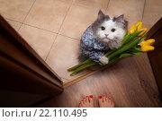 Купить «Кот с букетом желтых тюльпанов стоит на пороге», фото № 22110495, снято 7 марта 2015 г. (c) Светлана Валуйская / Фотобанк Лори