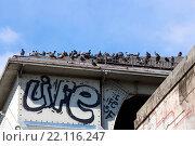 Купить «Tauben auf dem Dach einer Bahnunterführung, Berlin, Deutschland», фото № 22116247, снято 16 июня 2019 г. (c) age Fotostock / Фотобанк Лори