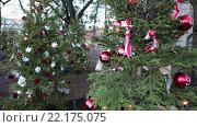 Купить «Рождественские елки, украшенные красивыми шарами, растут в земле. Хельсинки, Финляндия», видеоролик № 22175075, снято 24 января 2016 г. (c) Кекяляйнен Андрей / Фотобанк Лори
