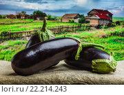 Необработанные баклажаны на фоне сельской местности. Стоковое фото, фотограф Олег Жуков / Фотобанк Лори
