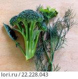 Свежие овощи на деревянной доске. Брокколи и укроп. Стоковое фото, фотограф Дарья Каба / Фотобанк Лори