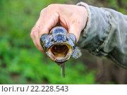 Купить «Головешка-ротан с открытой пастью в руках рыбака», фото № 22228543, снято 30 апреля 2012 г. (c) Алёшина Оксана / Фотобанк Лори
