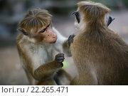 Две обезьяны. Стоковое фото, фотограф Юрий Соболев / Фотобанк Лори