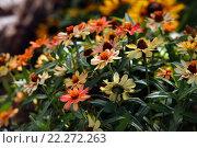 Купить «Маленькие цветы», фото № 22272263, снято 17 сентября 2011 г. (c) Морозова Татьяна / Фотобанк Лори