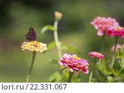 Бабочка сидит на цветке. Стоковое фото, фотограф Павкина Зоя / Фотобанк Лори