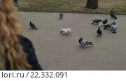 Купить «Девушка кормит голубей в парке», видеоролик № 22332091, снято 9 марта 2016 г. (c) Загородний Кирилл / Фотобанк Лори