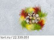 Перепелиные яйца и цветные перья. Стоковое фото, фотограф Козлова Анастасия / Фотобанк Лори