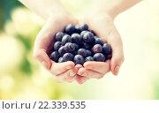 Купить «close up of woman hands holding blueberries», фото № 22339535, снято 28 апреля 2015 г. (c) Syda Productions / Фотобанк Лори
