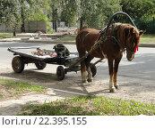 Лошадь с телегой. Стоковое фото, фотограф Владимир Резников / Фотобанк Лори