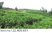 Купить «tea plantation field on Sri Lanka», видеоролик № 22409651, снято 16 февраля 2016 г. (c) Syda Productions / Фотобанк Лори