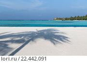 Купить «maldives island beach with palm tree and villa», фото № 22442091, снято 11 февраля 2016 г. (c) Syda Productions / Фотобанк Лори