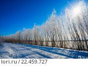 Купить «Солнце светит сквозь макушки деревьев в инее», фото № 22459727, снято 27 марта 2016 г. (c) Алексей Маринченко / Фотобанк Лори