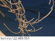 Купить «Winter in Siberia.», фото № 22489551, снято 20 июня 2018 г. (c) age Fotostock / Фотобанк Лори