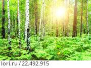Купить «Летний лес», фото № 22492915, снято 18 января 2019 г. (c) Зезелина Марина / Фотобанк Лори