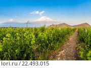 Купить «Khor Virap and Mount Ararat», фото № 22493015, снято 27 мая 2015 г. (c) Goinyk Volodymyr / Фотобанк Лори