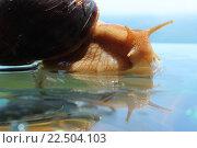 Улитка. Стоковое фото, фотограф Коновалова Марина / Фотобанк Лори